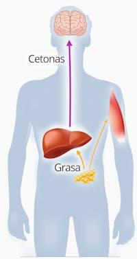 dieta cetosis y enfermedad cardíaca clínica mayo