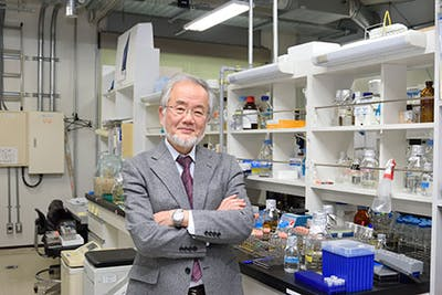 ohsumi-in-lab