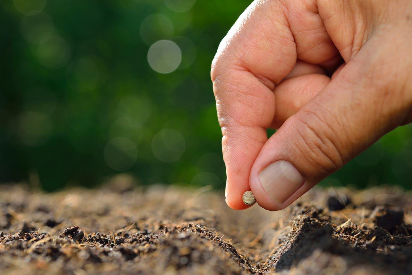 Las especialidades de siembra de semillas