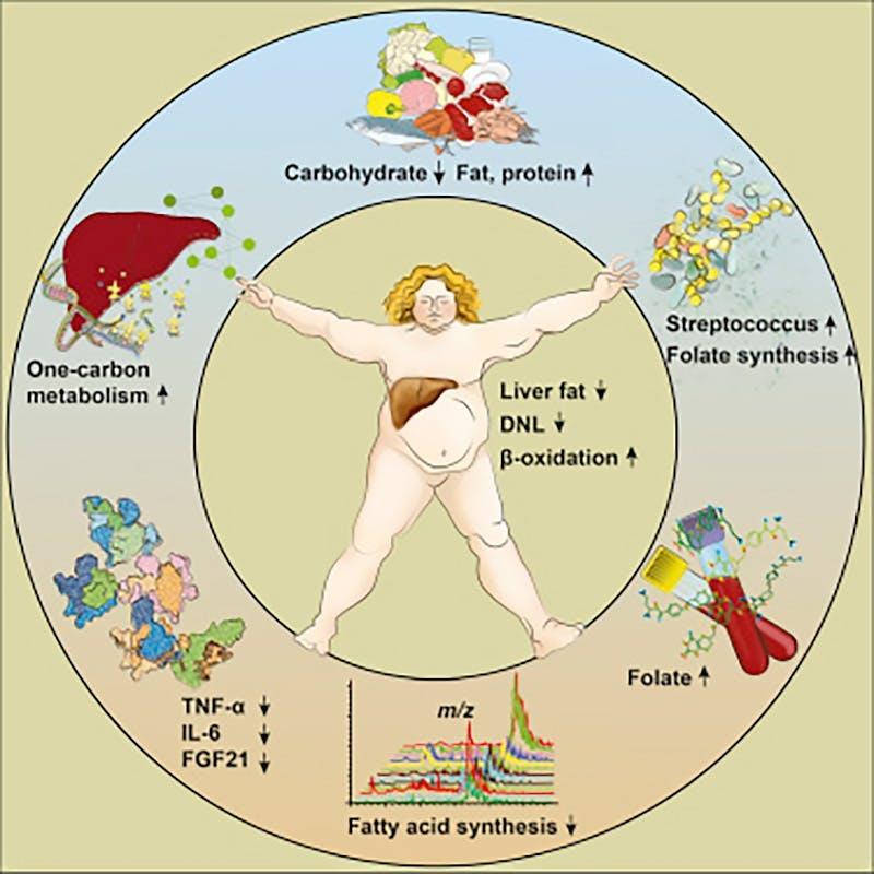 Nuevo estudio: ¿se puede corregir el hígado graso comiendo bajo en carbohidratos?