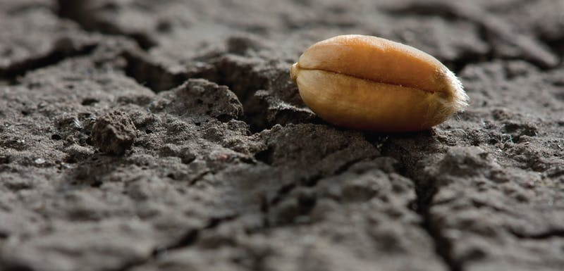 semilla en la tierra