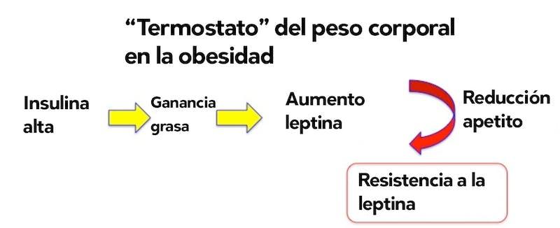 Termostato del peso corporal en la obesidad