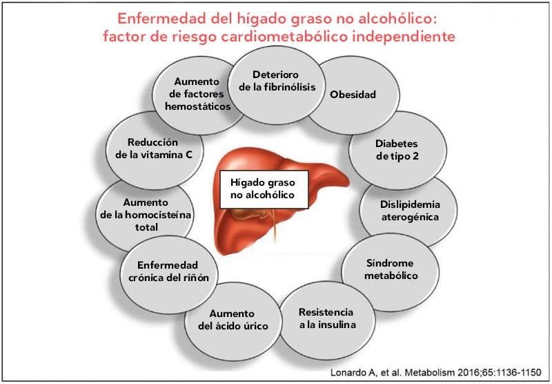 Alcoholico graso para el dieta higado no