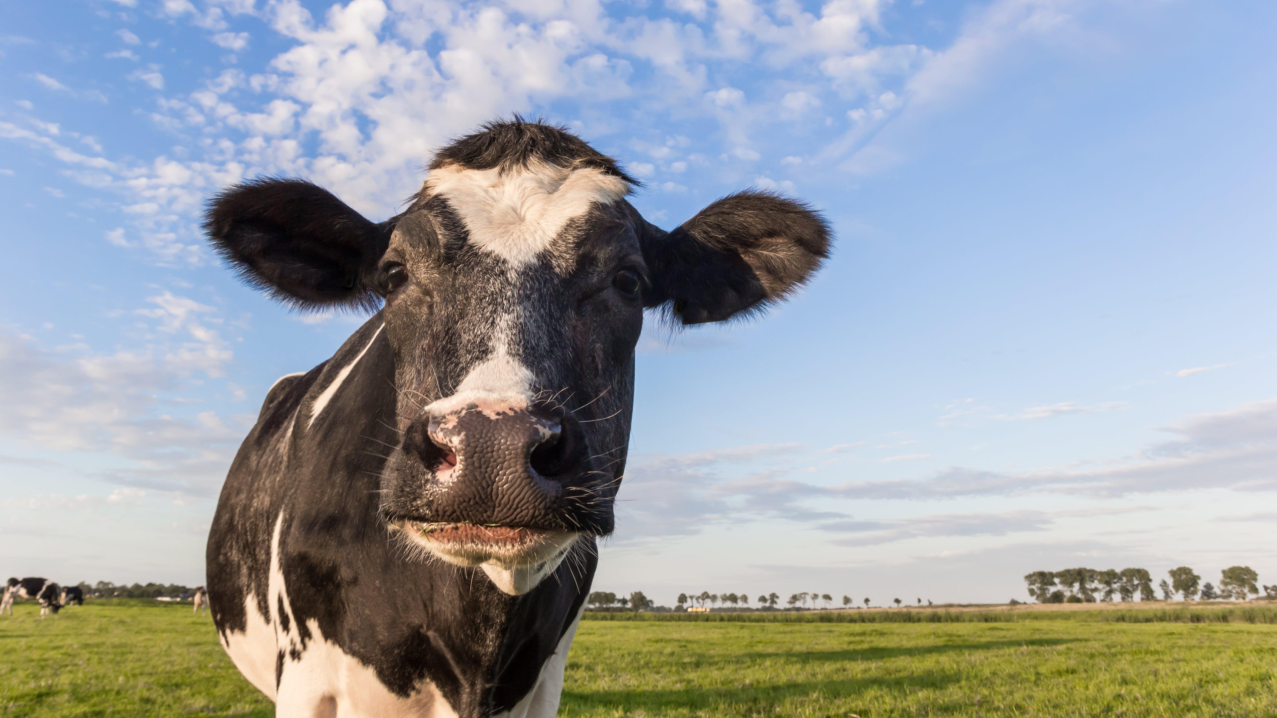 ¿Podrían los productos lácteos enteros ayudarte a vivir más tiempo?