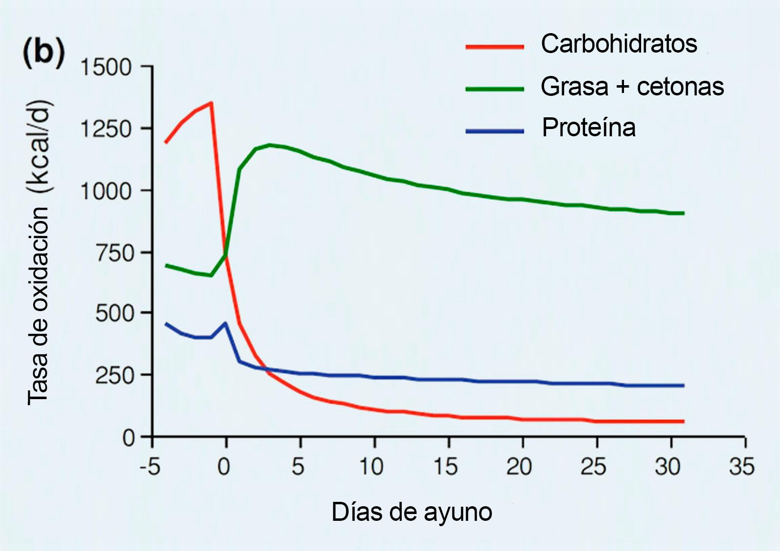 Macro oxidación