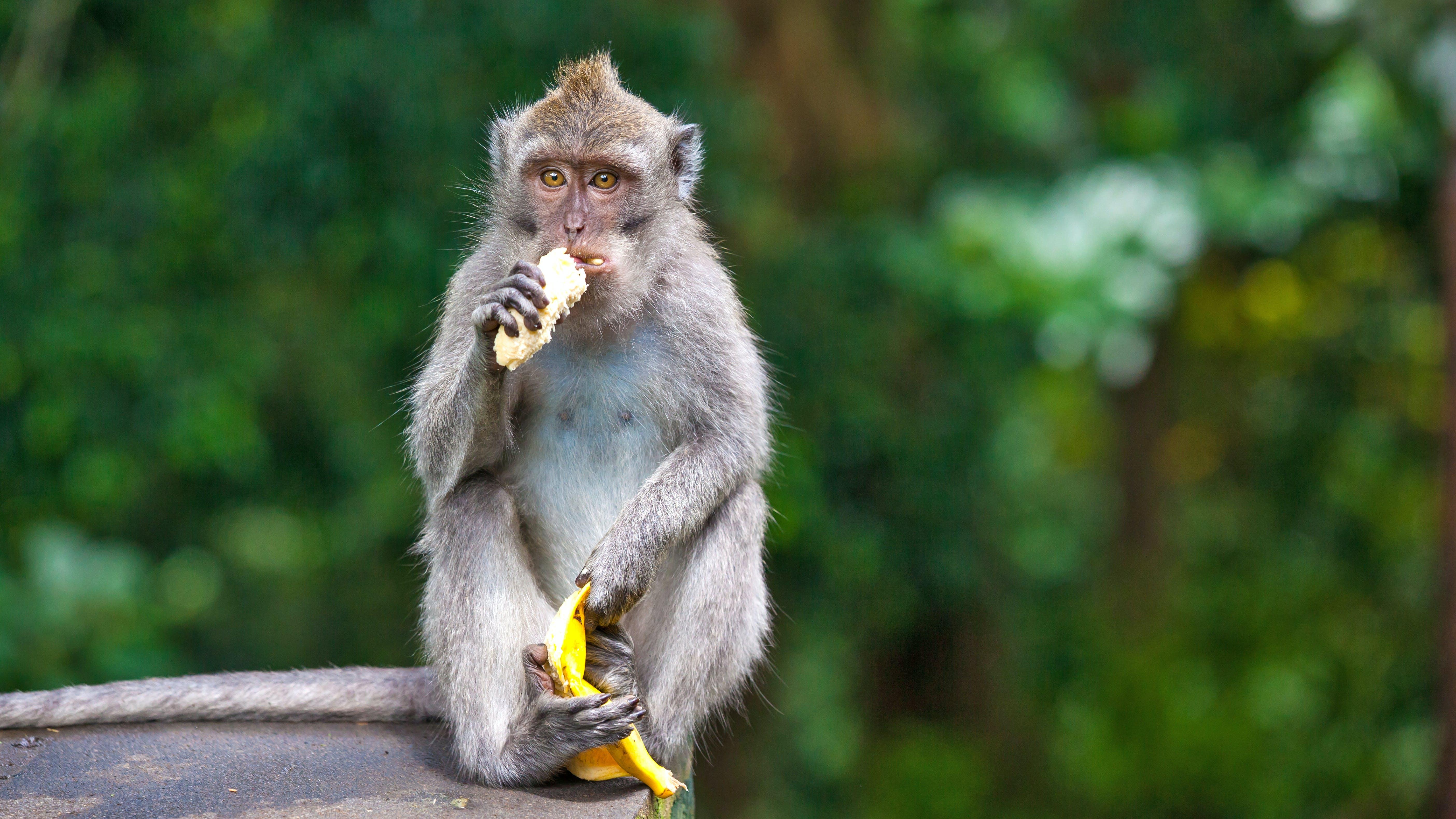 El zoo de Melbourne deja de alimentar a sus animales con fruta