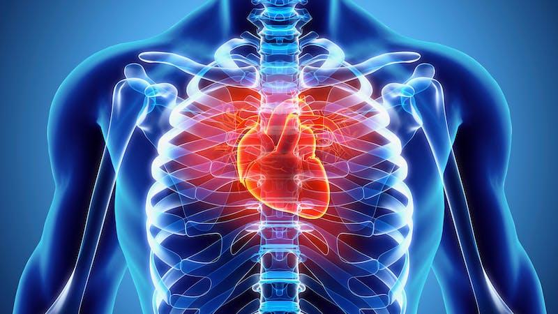Ilustración 3D de corazón humano