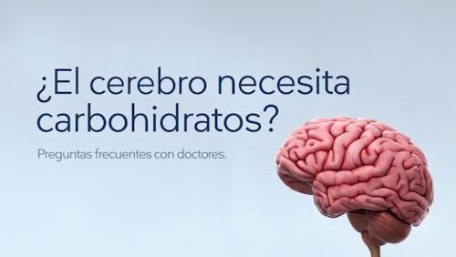 Preguntas frecuentes: ¿El cerebro necesita carbohidratos?