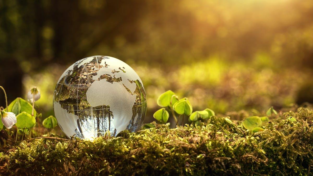 Seis formas de cuidar del medioambiente con low carb o keto