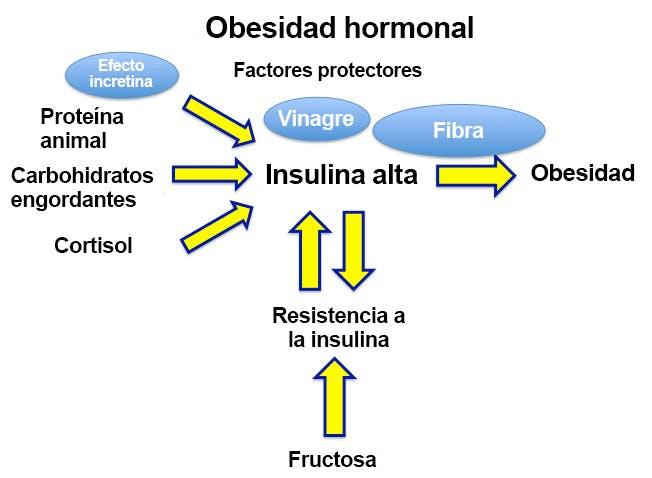 Obesidad hormonal
