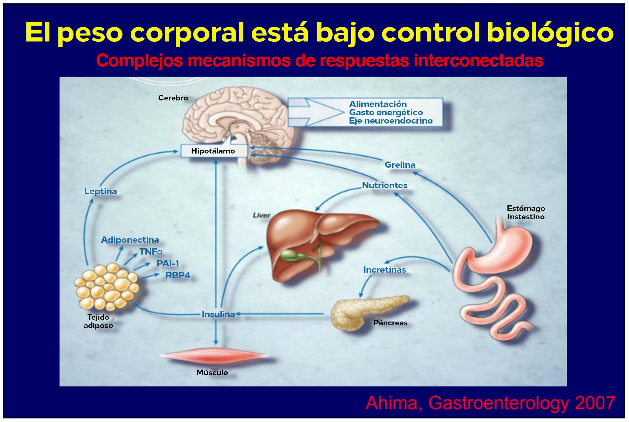 Body weight is under biological control
