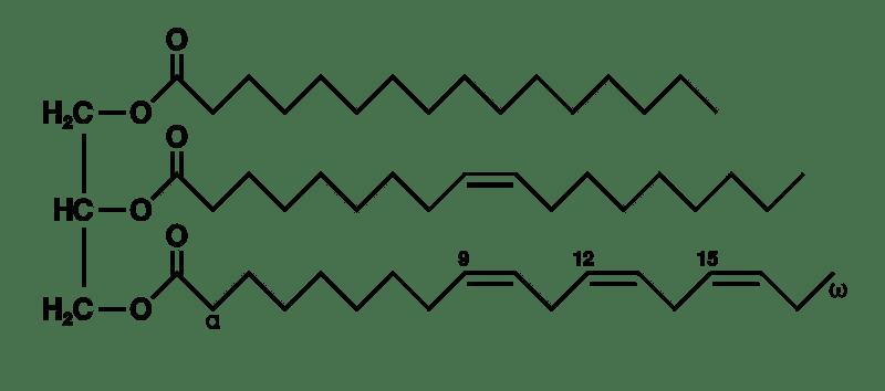 Triglicéridos