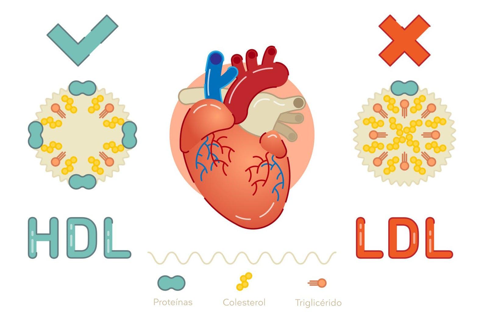 colesterol HDLLDL-1