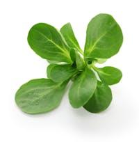 verdura hoja verde