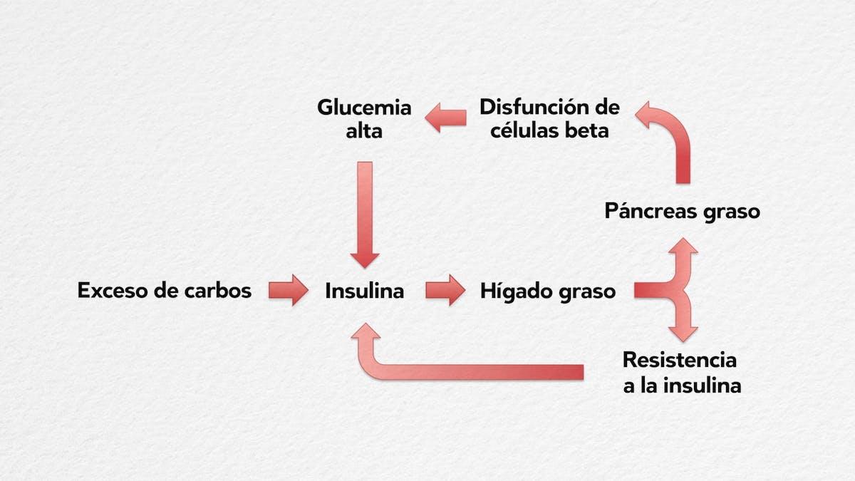 8. La falla de las células beta