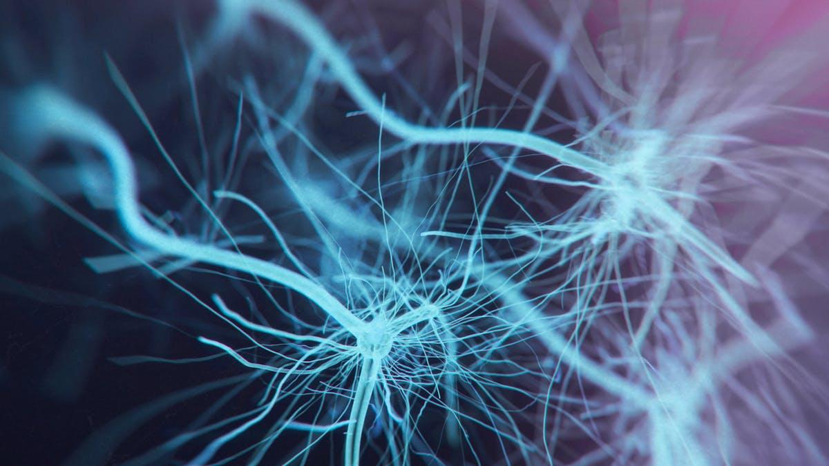 ¿Interviene el LDL en la función de los nervios periféricos?