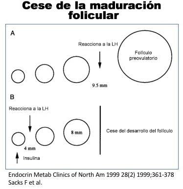 Cese maduración folicular