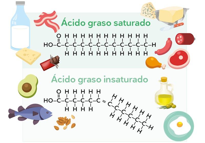 Ácidos grasos saturados e insaturados