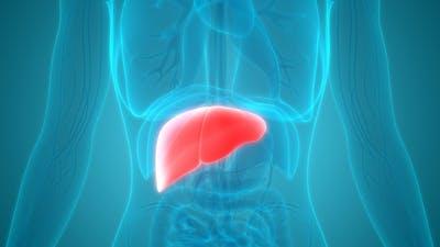 Hígado graso y keto