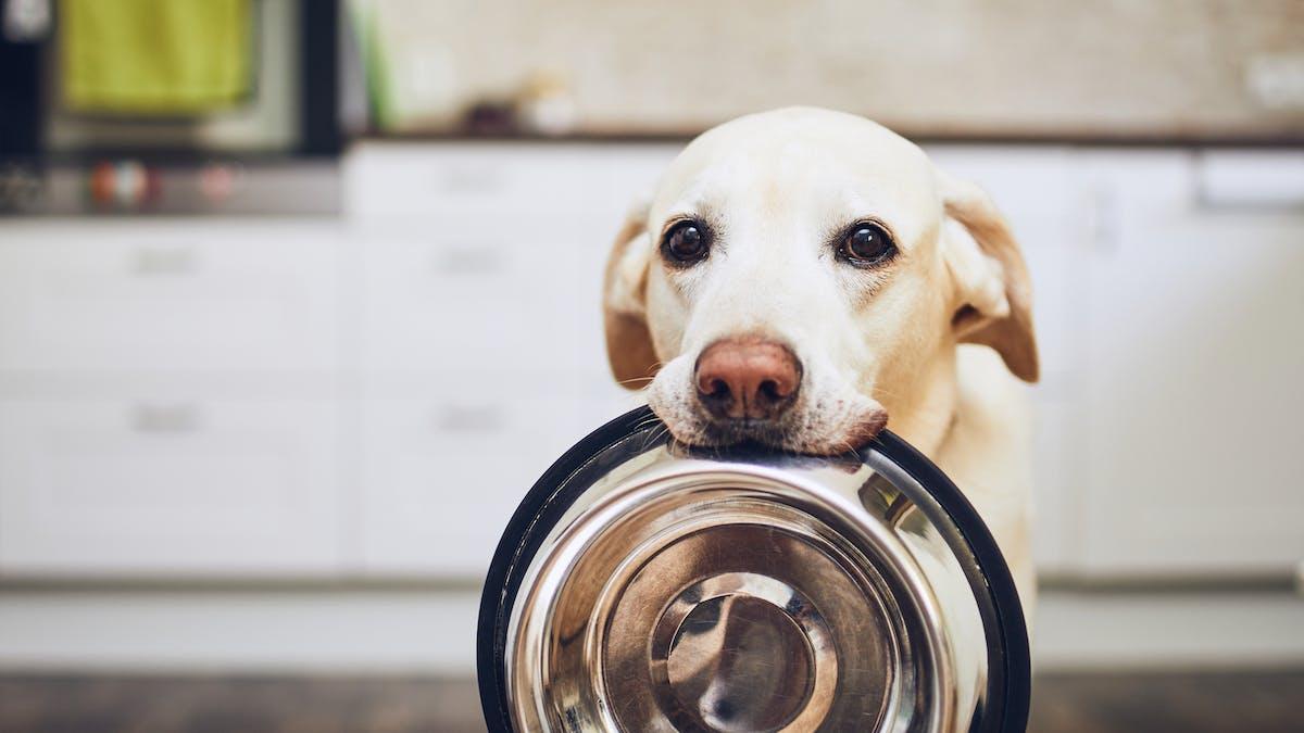 Cómo manejar el hambre cuando se intenta adelgazar