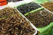 Insekter till salu. Chang Mai, Thailand.
