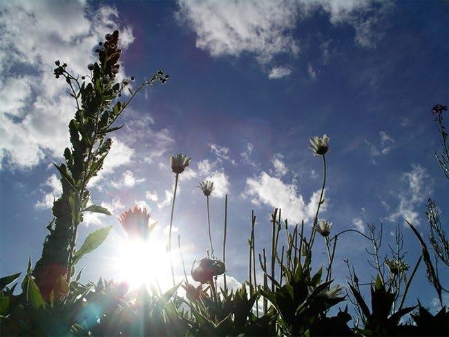 Växter i solen
