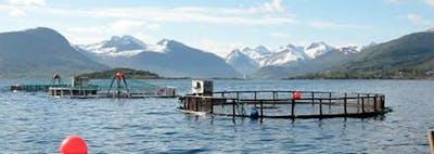 Norsk fiskodling