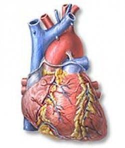 hjärta-stor