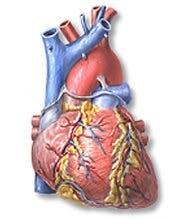 Omega 3 och hjärtat