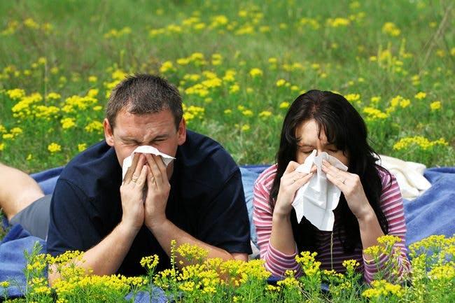 Hjälper D-vitamin mot pollenallergi?