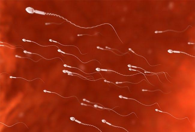 LCHF och spermievarningen