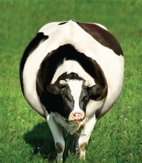 Fet ko