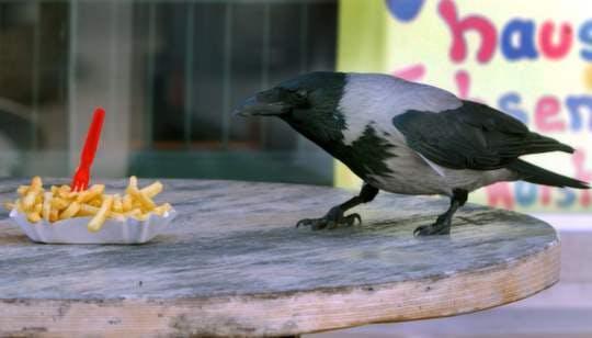 McDonald's-sjukan dödar stadens fåglar