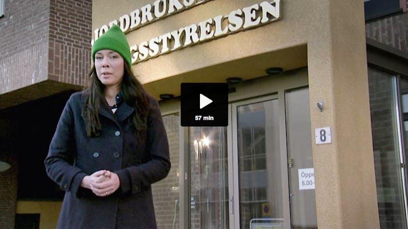 SVT Plus jagar sockerfällor