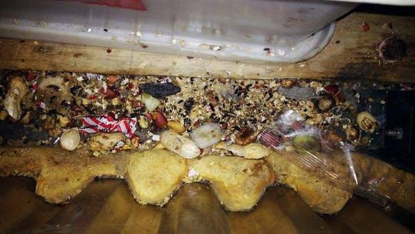 Musbajs hittades i godisfabrik