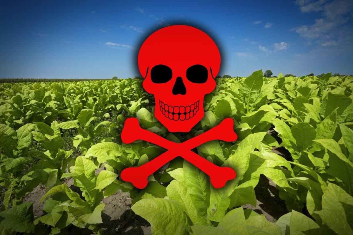 Cancerframkallande grönsaker