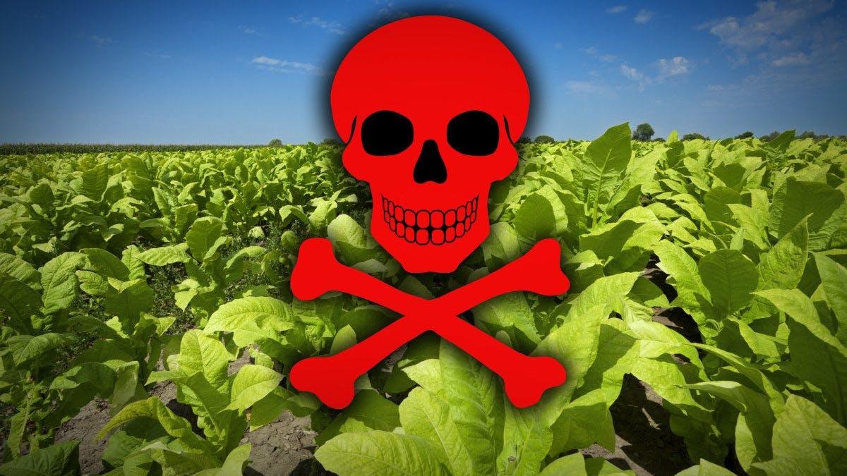 Det bästa från 2015: Grönsaker har bevisats orsaka cancer