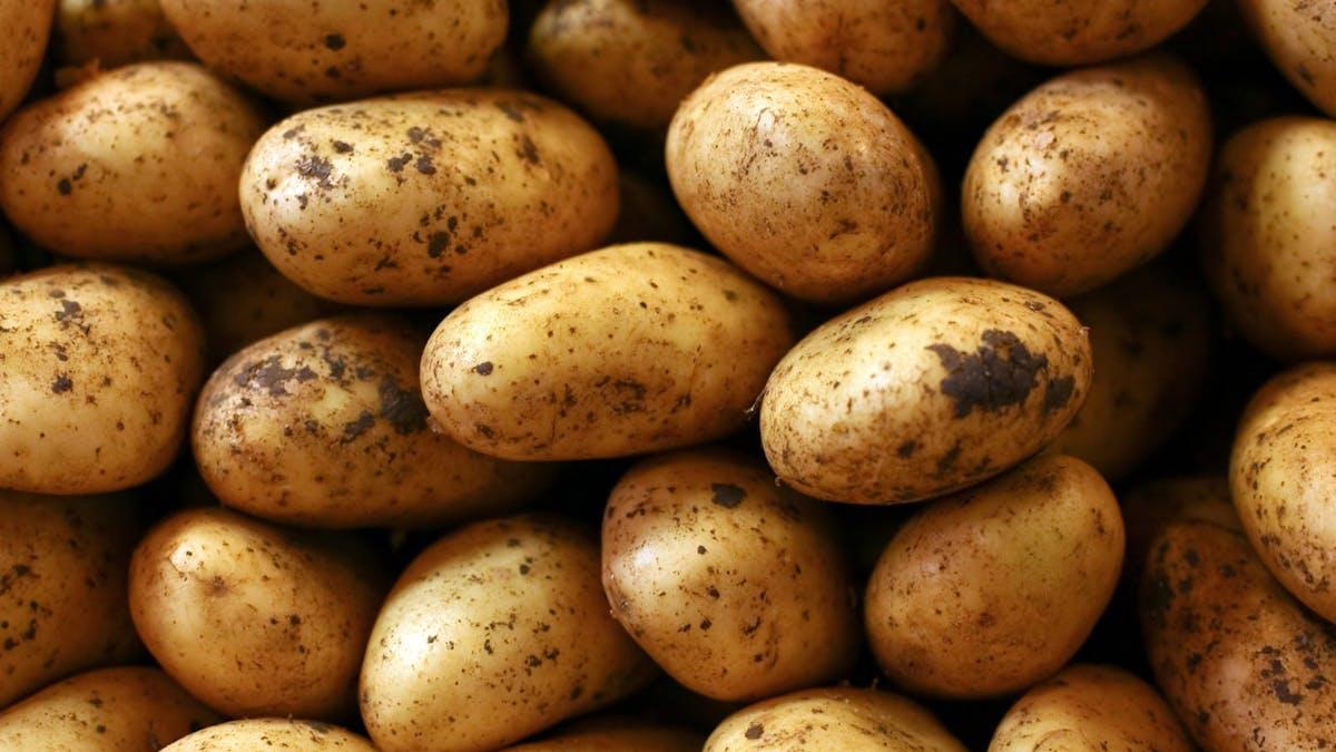 Kan man gå ner i vikt genom att bara äta potatis?