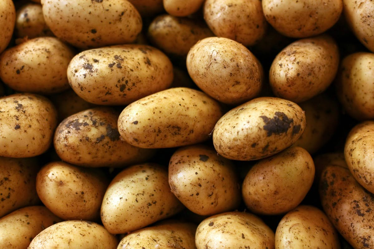 Close-up-of-fresh-potatoes-000017638378_Large-1600x1067