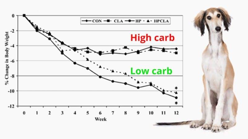Till och med hundar går ner mer i vikt på LCHF