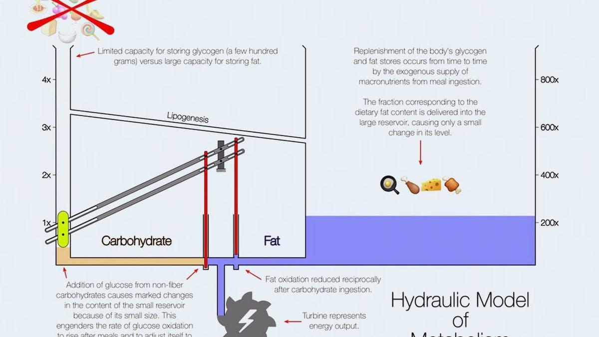 <strong>Kolhydratmetabolism kontra fettmetabolism</strong> – dr Ted Naimans hydrauliska modell