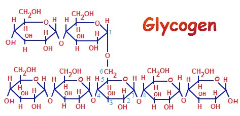 glycogen-polysccharide