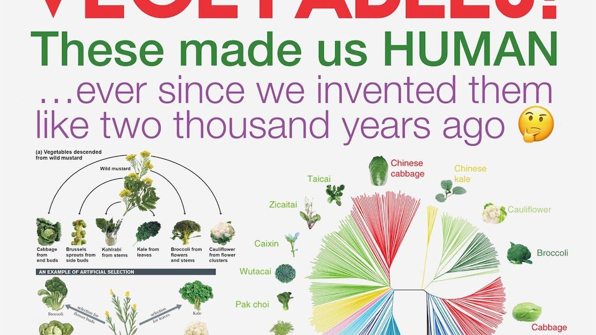 Moderna grönsaker – resultatet av ett artificiellt urval