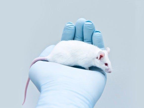 Ketogen kost förlänger livet och förbättrar minnet hos möss
