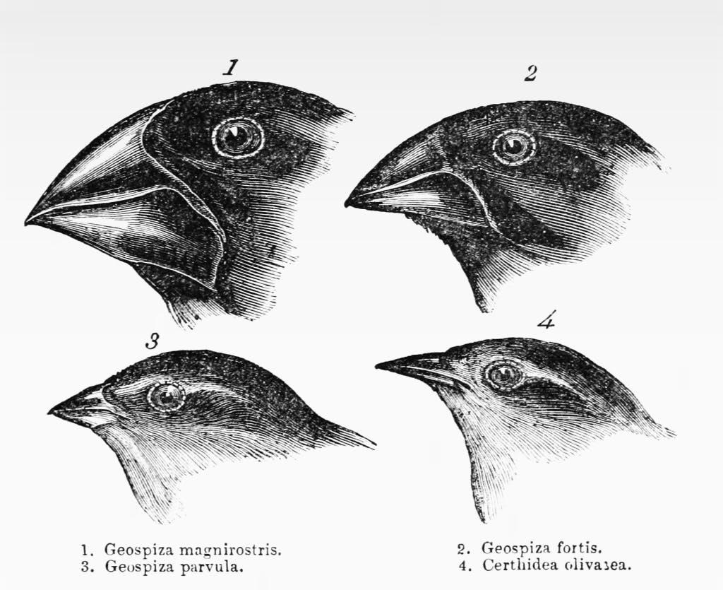 Darwins evolutionsteori eller varför cancer inte bara är resultatet av slumpmässiga mutationer