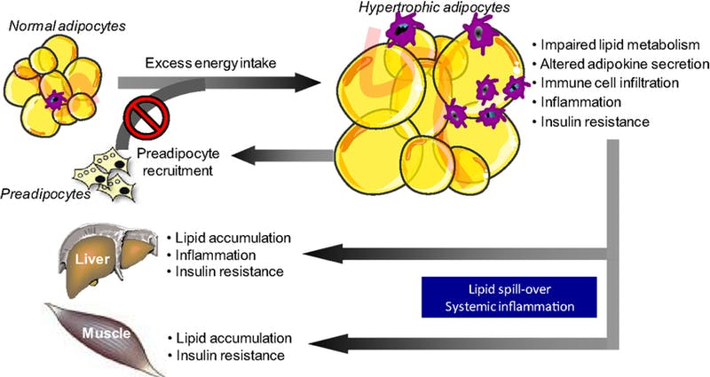 Bild 3, Metabol dysfunktion