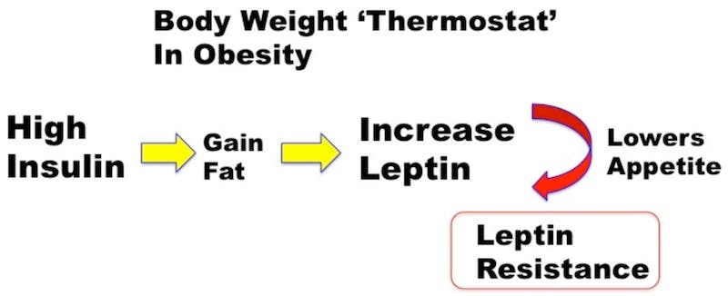 body-weight-thermostat-obesity