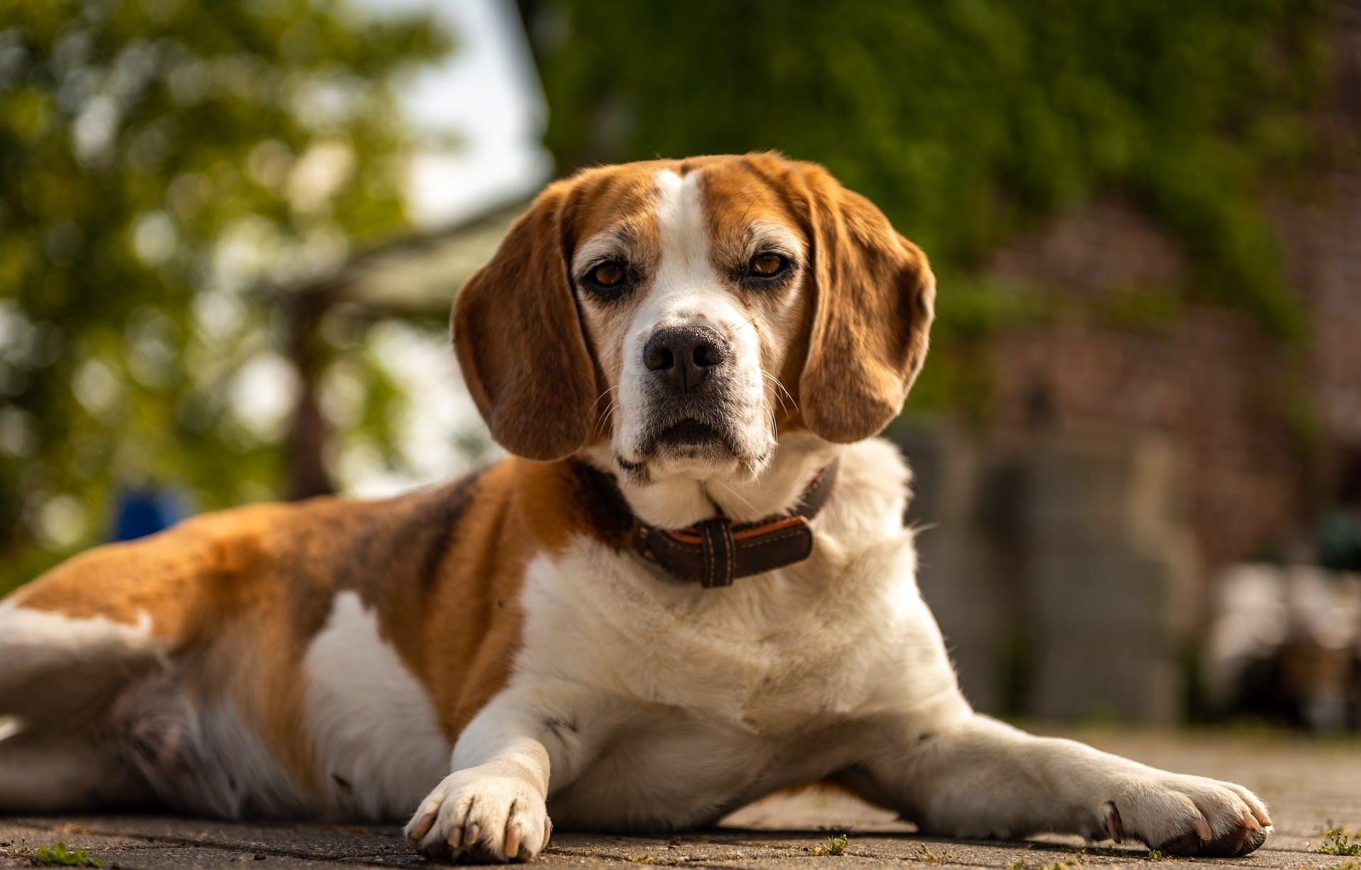 Keto för hundar