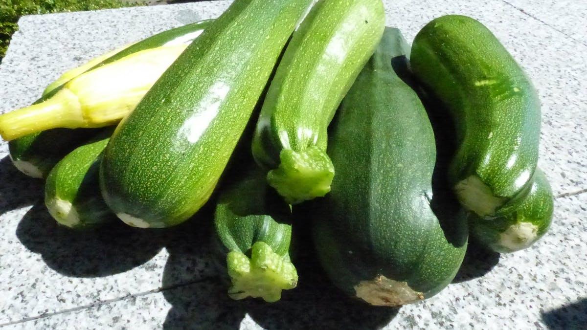 Ode till zucchinin
