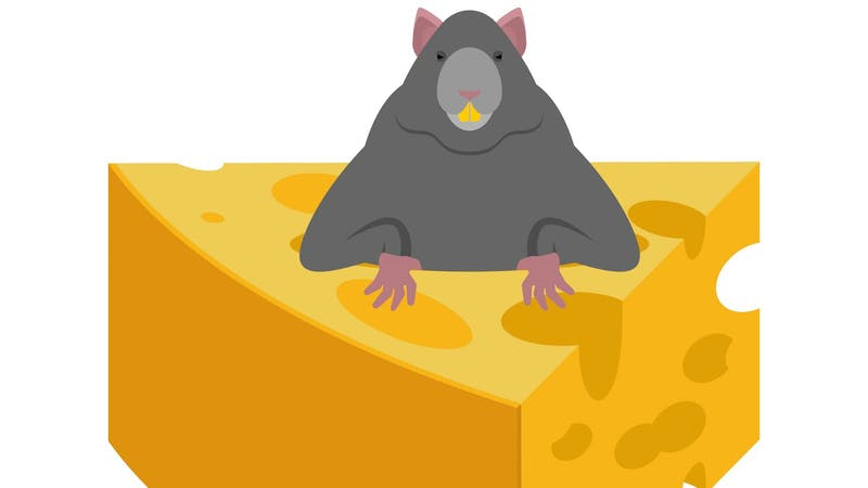 Mouse and cheese. Rodent vector Illustration